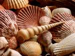 seashells-photo